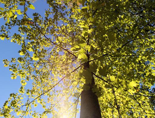 Whittington,-Alan---Frick-Tree---OK