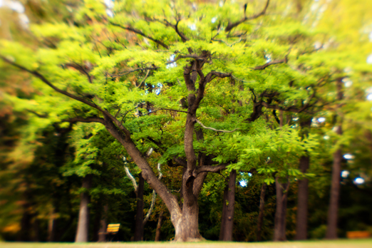 Lensbaby tree