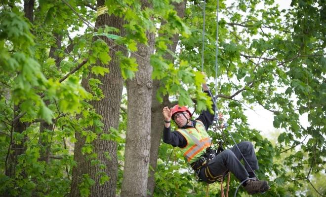 Image of a man climbing a tree