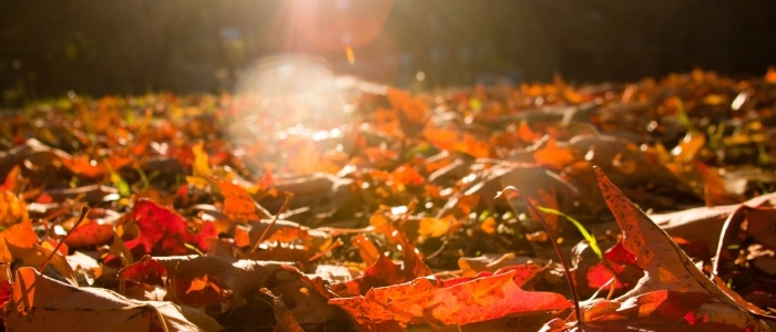 Photo of sun shining over fall leaves