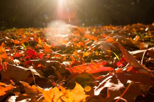 Image of fall leaves in sunlight