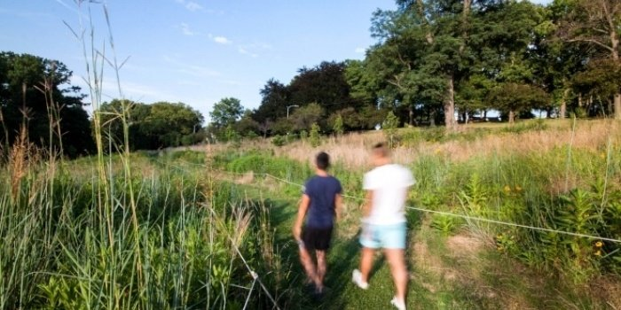 Image of a meadow in Schenley Park