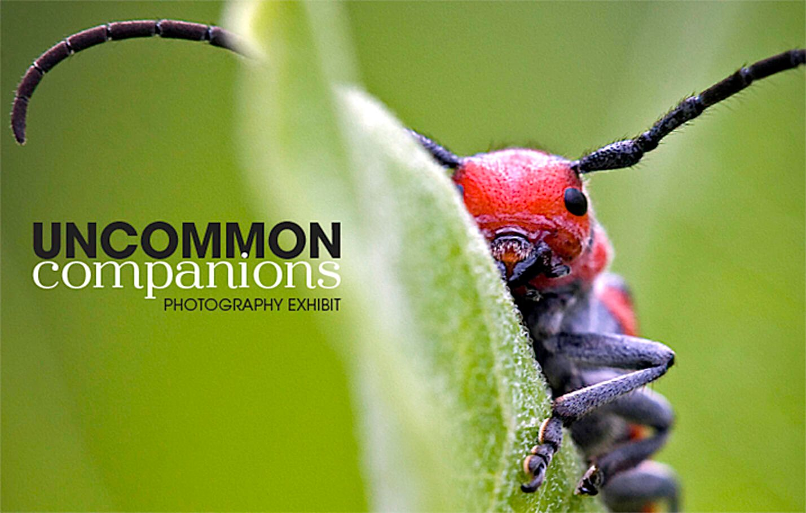 UncommonCompanionsEMailHeader