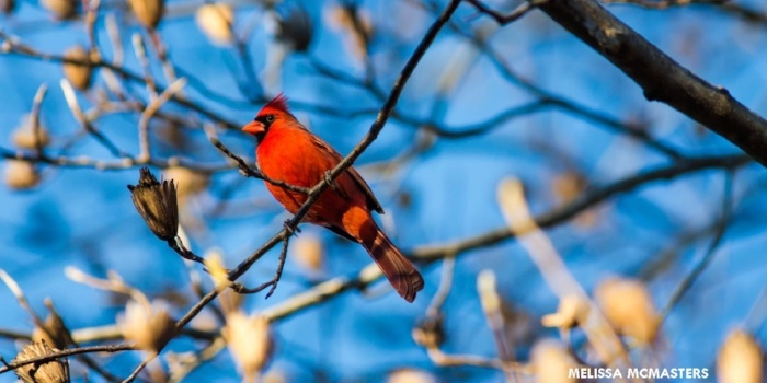 Image of a cardinal against a blue sky