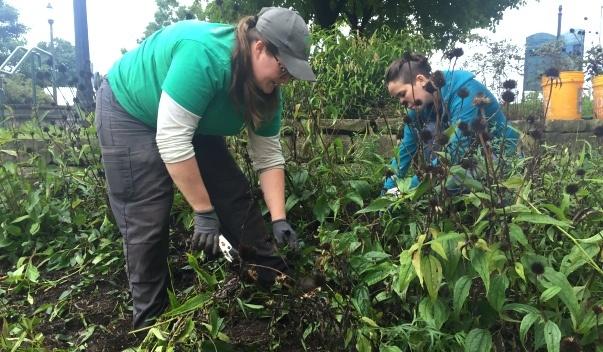 Image of a Parks gardener and volunteer weeding