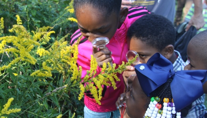 Image of kids looking at goldenrod