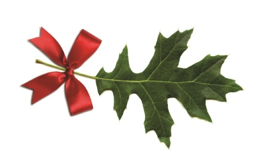 Image of a leaf with a red bow
