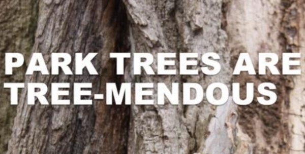 Park trees are tree-mendous