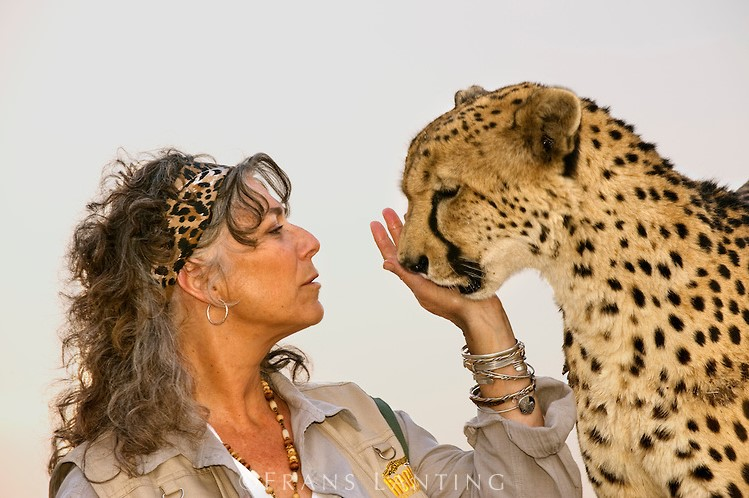 Cheetah conservation fund Belgium 7