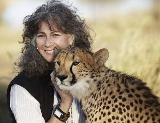 Cheetah conservation fund Belgium 9
