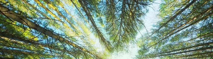 Timber...