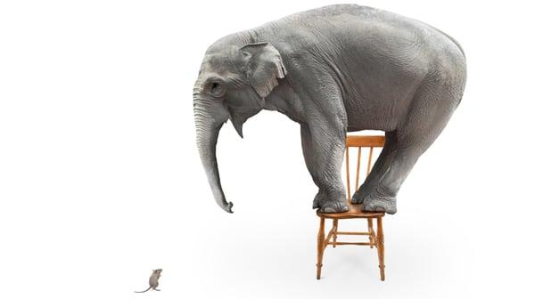 elephant-and-mouse_web_750x420