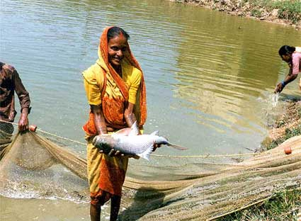 Япония и Южная Корея проявляют интерес к индийскому рыбному сектору