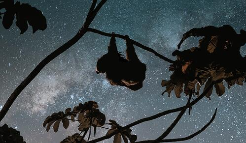 sloth in costa rica under stars