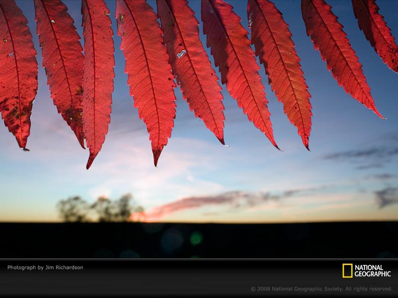red-leaves-richardson-1053949-sw