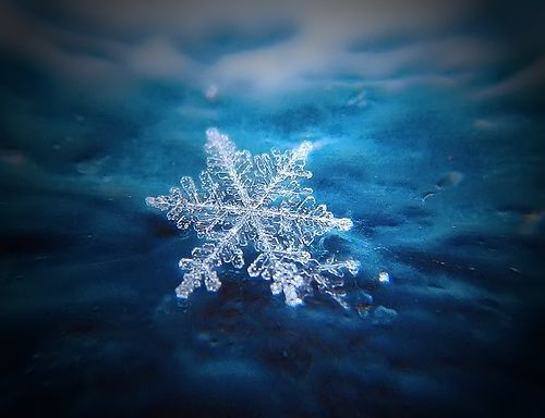 snowflake2 resized 600 Swimming Pool Companies