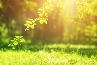 A tree branch and grass in sunlight.