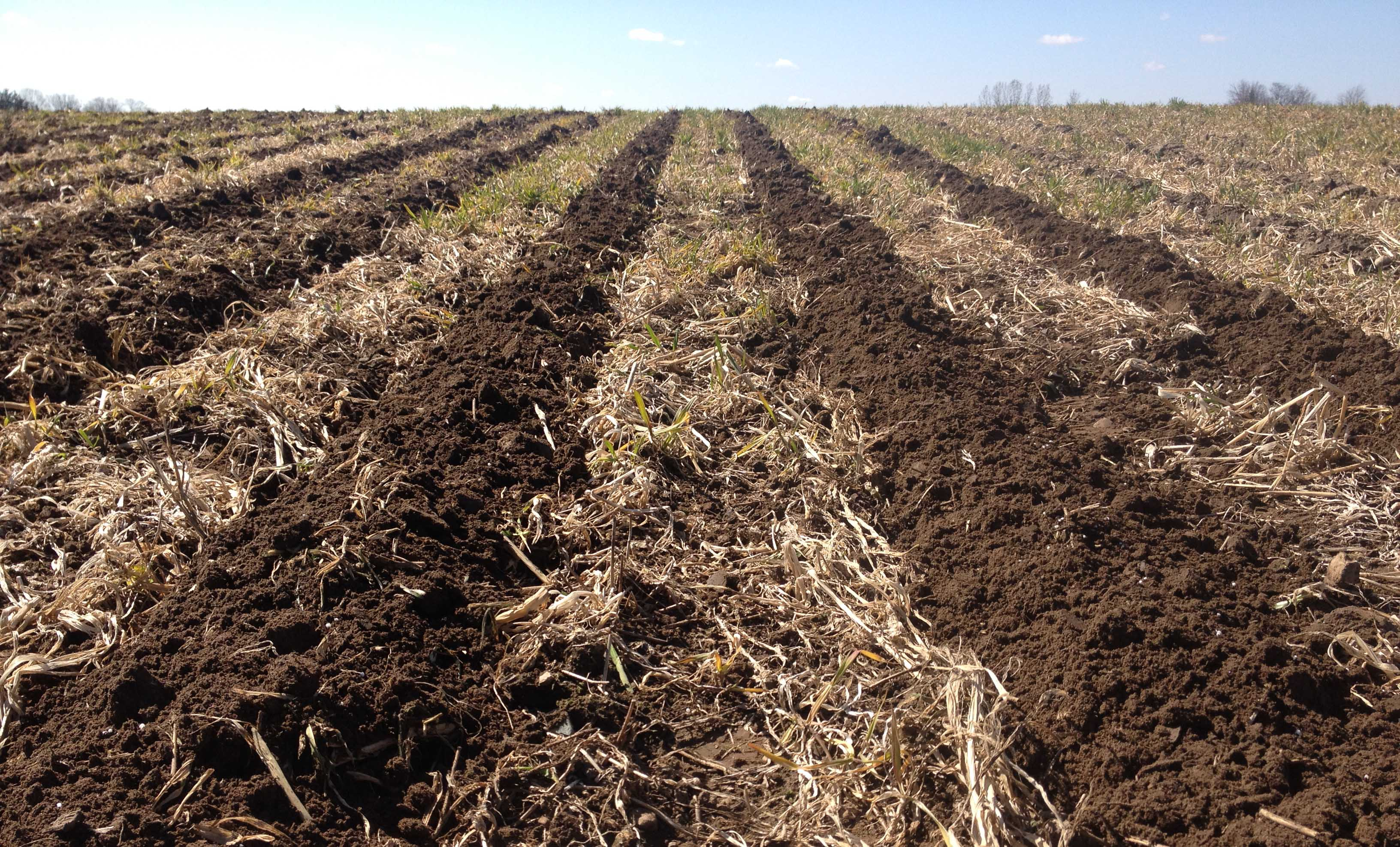 Cover crops and strip tillage yield more than soil health for Where do we find soil