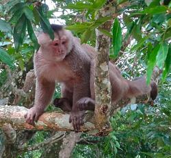 amazon rainforest adventure monkey
