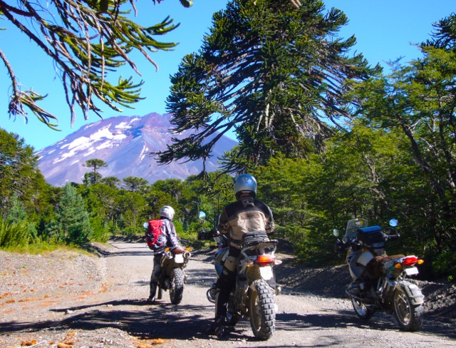 Araucania Trees and Motorcycle Riders