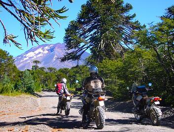 Araucania Trees and Motorcycle Riders