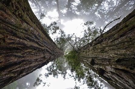 California Cannabis News and Updates