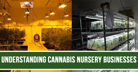 Cannabis-Nursery-Businesses