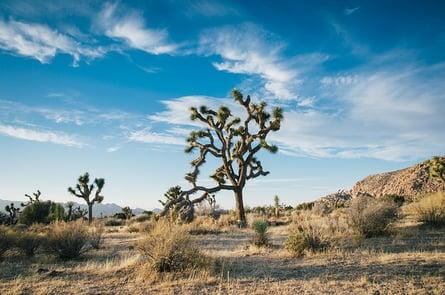 desert-landscape-1149773_640