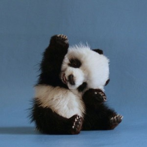 Panda should be harmless to white hat SEO's.