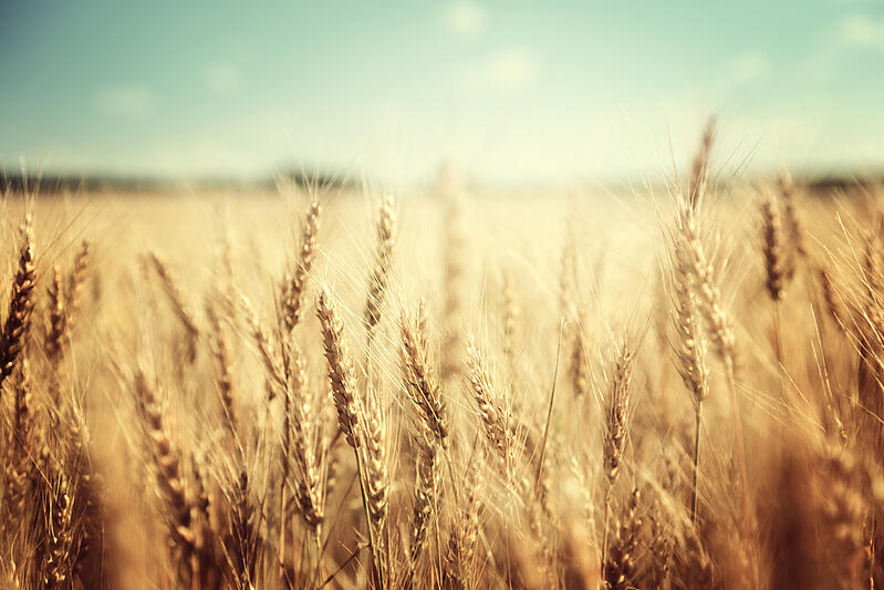 Should You Go Gluten Free??noresize