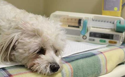 Treatment for Tick Paralysis