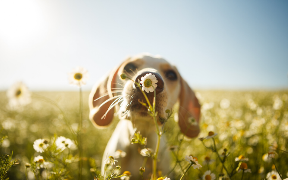 Non-Toxic Plants for Pets (an A - Z guide to pet friendly plants)