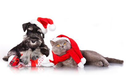Further information about dangers for pets at Christmas
