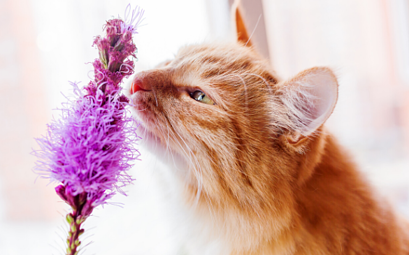Flowers and Plants Toxic to Dogs and Cats (an A-Z guide)