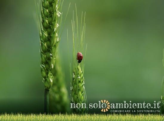#SustainingAllLife, la Giornata Mondiale della Natura 2020 celebra tutte le forme di vita