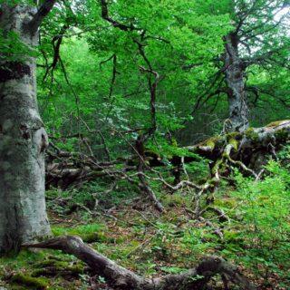 Italia, foreste in crescita: un terzo del Paese è verde