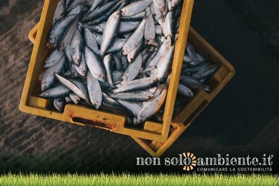 5 motivi per cui il pesce apporta benefici alle persone e all'ambiente