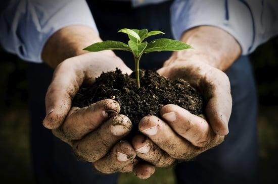 Agricoltura biodinamica: più cibo sano, meno frane e alluvioni