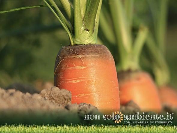 Agroecologia e filiera corta: il futuro dell'agricoltura UE