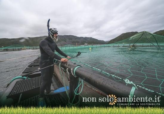 Artifishal, online il film di Patagonia sull'estinzione di salmoni e pesci selvaggi