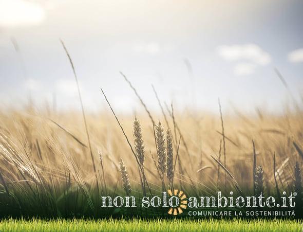 Creare il biofuturo: un rapporto sullo stato della bioeconomia