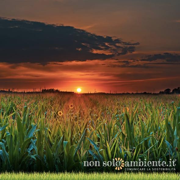 Cambiamo Agricoltura: una nuova PAC Post 2020