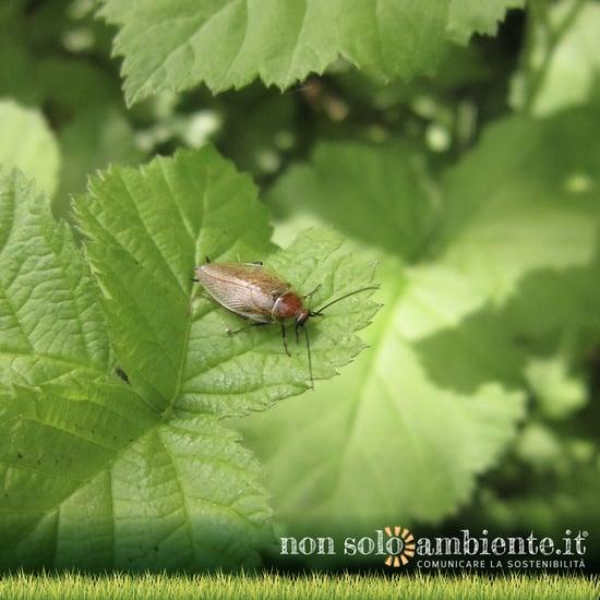 Come gli scarafaggi stanno aiutando la Cina a smaltire i rifiuti
