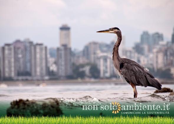 COVID-19: animals populate cities