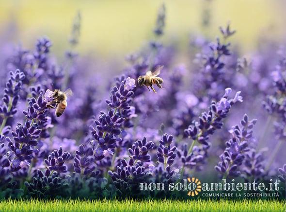 Il futuro dipende (anche) dalle api