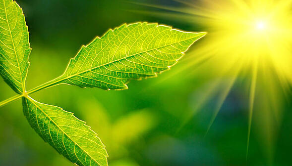 Fotosintesi artificiale? Scoperto un modo per assorbire CO2 più velocemente delle piante