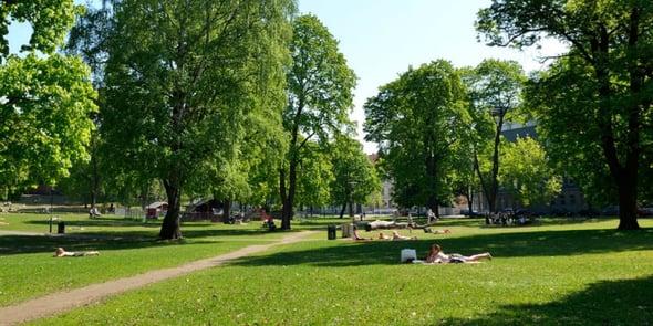 Verde urbano: 31mq ad abitante, ma distribuzione disomogenea