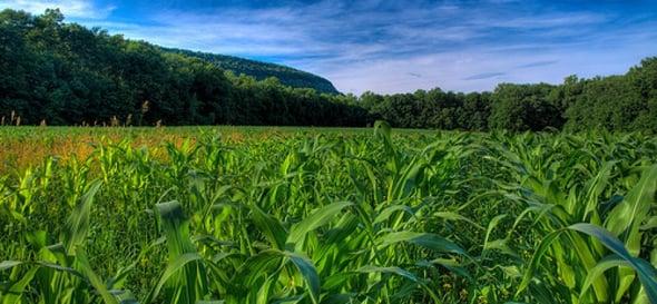 Agricoltura conservativa: un nuovo approccio per tutelare terreni e ambiente