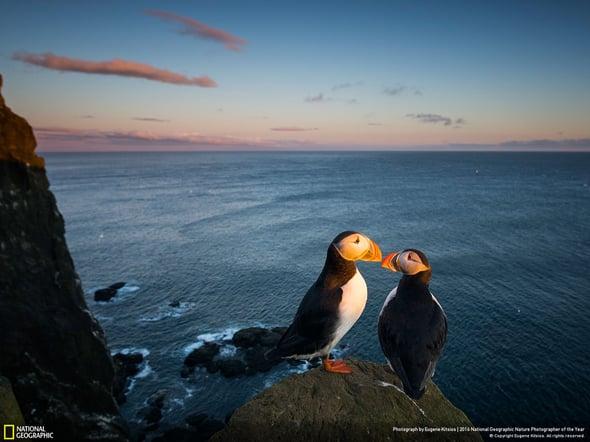 Le migliori foto naturalistiche dell'anno secondo National Geographic