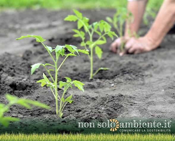 Annuario ISPRA, in Italia è boom dell'agricoltura biologica